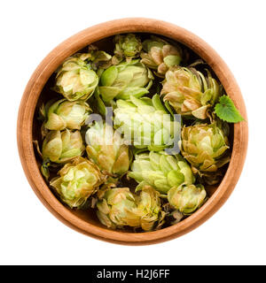 Hops in wooden bowl on white background. Half dried seed cones from the hop plant, Humulus lupulus. - Stock Photo