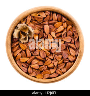 Shelled beechnuts in a wooden bowl on white background, also called mast, with a burr. Brown seeds of European beech. - Stock Photo