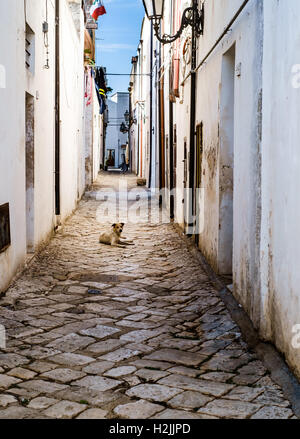 lonely stray dog lying in an alley - Stock Photo