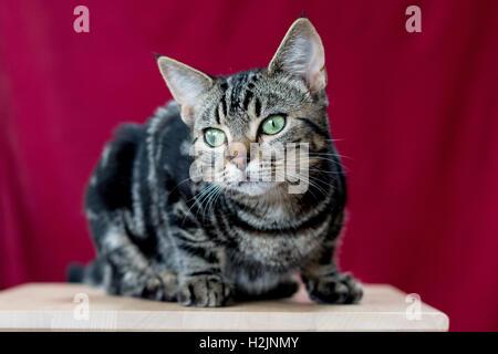 Kitten posing - Stock Photo