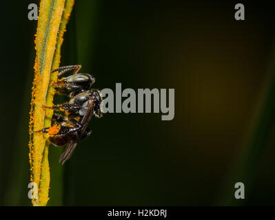 Stingless Bee on the pollen in the garden - Stock Photo