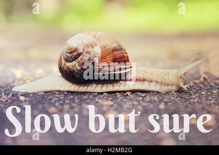 Snail on the road toned vintage style - Stock Photo