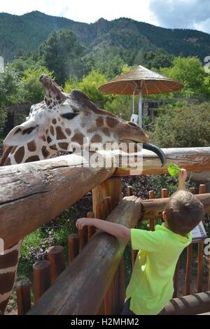 Boy feeding a giraffe at Cheyenne Mountain Zoo at  Colorado Springs - Stock Photo