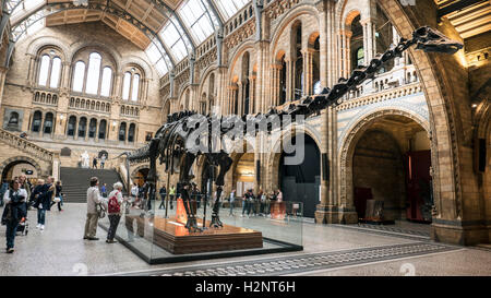 'Dippy' the Diplodocus Dinosaur at the Natural History Museum in London - Stock Photo