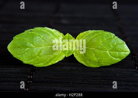 green plant on black background - Stock Photo