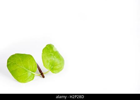 green plant on white - Stock Photo