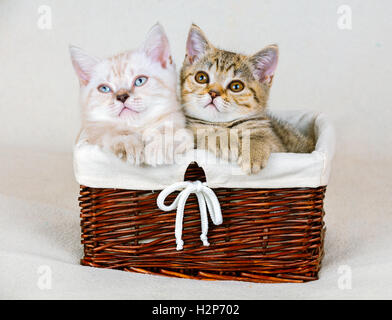 Two cute little kittens sitting in a basket - Stock Photo
