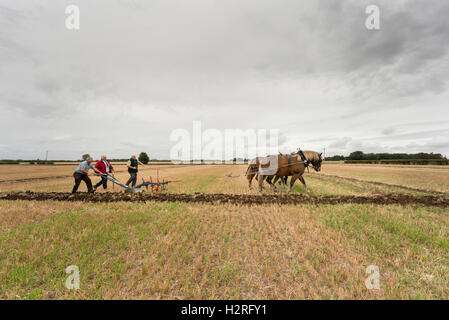 Cottenham, Cambridgeshire, UK 1st October 2016. French Comptois draught horses Bolero and Univere take part in the - Stock Photo
