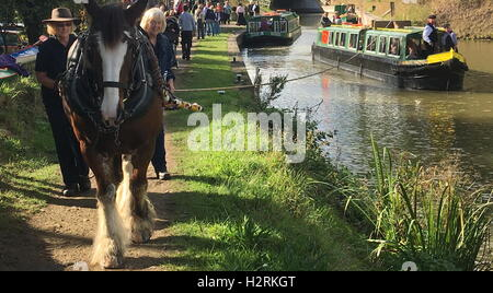 Wey & Arun Canal Trust 200-Year Anniversary - Horse pulling Narrowboat at Loxwood, West Sussex - Stock Photo