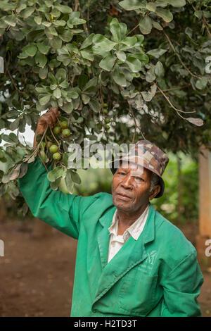 Fair trade macadamia nut grower in Kirinyaga County, Kenya. - Stock Photo