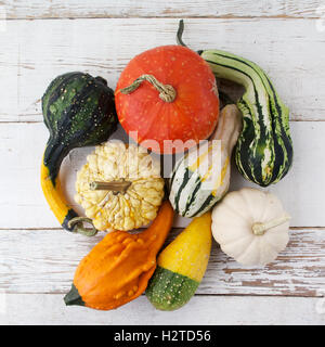 Autumn harvest bright decorative pumpkins. Top view. Flat lay. - Stock Photo