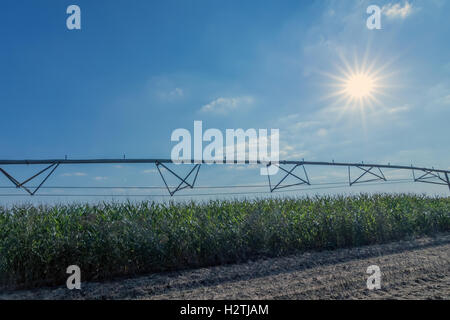Corn field and irrigation equipment - Stock Photo