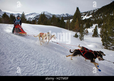 Pirena. Sled dog race in the Pyrenees going through Spain, Andorra and France. Grandvalira. Andorra - Stock Photo