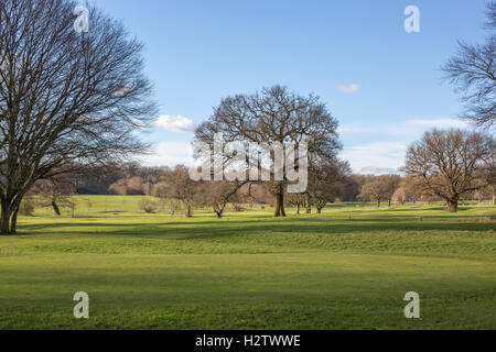 View of the southern part of Coventry's War Memorial Park during a walk on a sunny winter day, Coventry, West Midlands, - Stock Photo