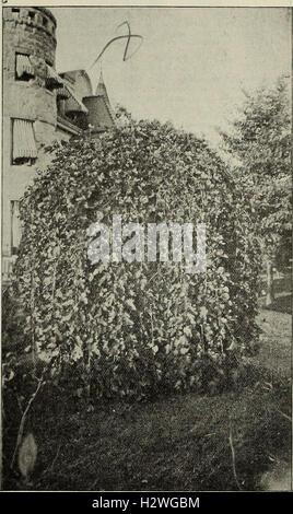 Descriptive catalogue - ornamental trees, shrubs, vines, evergreens, hardy perennials and fruits (1902) (2037757 - Stock Photo