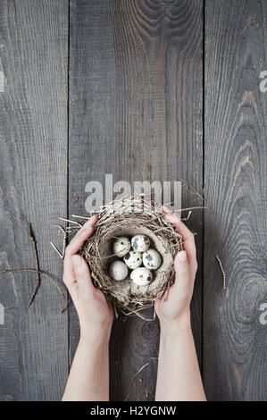 Woman's hands holding the small nest - Stock Photo