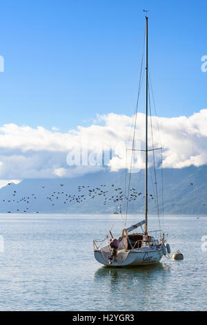 Lone yacht and flock of birds with mountains and low cloud backdrop on Lake Geneva, Switzerland - Stock Photo