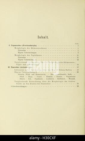 Beiträge zur vergleichenden Morphologie des Unpaarzeher- und Paarzeher-Fusses BHL442 - Stock Photo