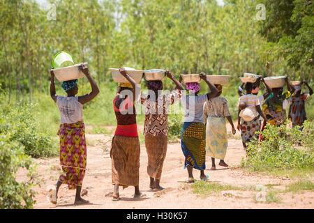 Women collect fallen shea fruit, the nut from which is used for making shea butter and oil, in Burkina Faso, Africa. - Stock Photo