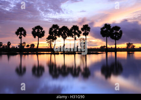 Colorful sunrise landscape with silhouettes of palm trees on Chau Doc city, Vietnam. - Stock Photo