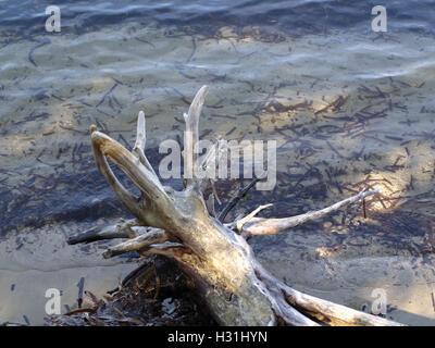 Interesting driftwood washed up at Roda Beach, Corfu, Greece - Stock Photo
