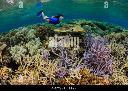 QZ0765-D. Woman (model released) snorkels over hard and soft corals on a healthy coral reef in the Great Barrier - Stock Photo