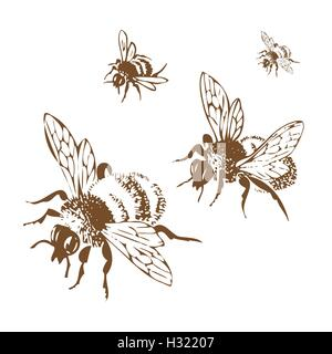 Vector engraving antique illustration of honey flying bees, isolated on white background. Set of flying bees, brown - Stock Photo