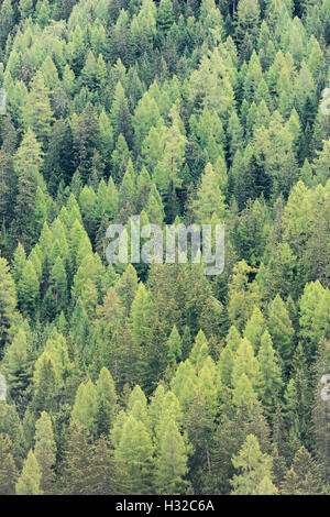 Variety of different dark and light shades of green coloured treetops of a deep alpine forest in Switzerland (Valais) - Stock Photo