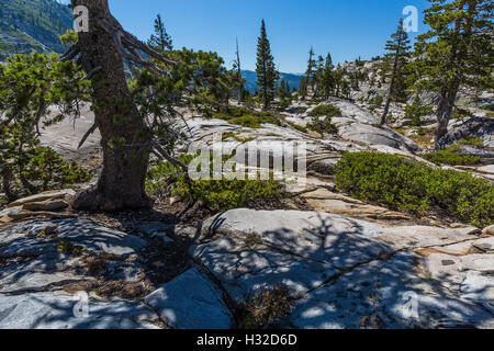 Granite with Lodgepole Pine, Pinus contorta, near Ropi Lake, Desolation Wilderness, Eldorado National Forest, California, - Stock Photo
