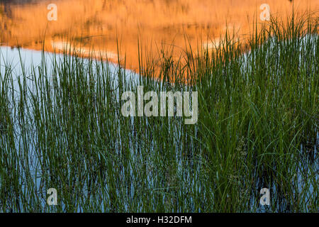 Morning light on Ropi Lake, with Pyramid Peak reflected on the surface, Desolation Wilderness, California, USA - Stock Photo