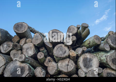 pile of logs with blue sky - Stock Photo