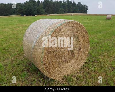 Heuballen, Ballen, Futter, Heu, - Stock Photo
