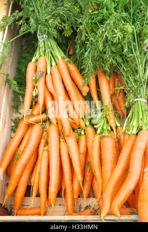 Fresh organic carrots with tops for sale at a greengrocers UK - Stock Photo