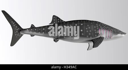 Whale Shark Side Profile - Stock Photo