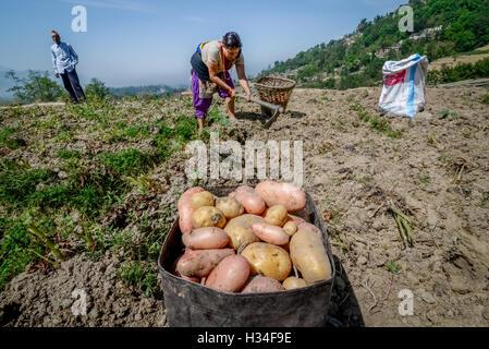 Potato farmers in Nagarkot in the outskirts of Bahktapur, Nepal. © Reynold Sumayku - Stock Photo