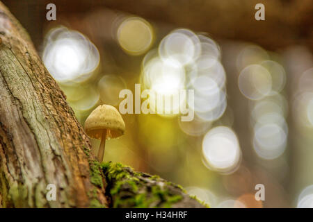mushrooms in autumn with beautiful colors - Stock Photo