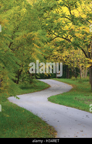 Walnut Trees In Autumnal Park, Large Detailed Vertical Landscaped Autumn Path Scene, Twisting Tarmac Walkway, Winding - Stock Photo