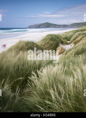 Windswept grasses at Traigh Eais beach, Isle of Barra, Outer Hebrides, Scotland - Stock Photo