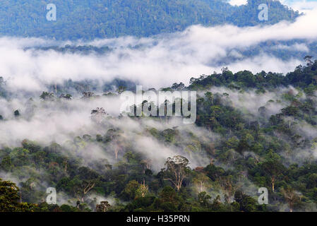 Mist and fogs over  Danum Valley jungle in Sabah Borneo, Malaysia. Danum Valley Conservation Area is a 438 square - Stock Photo