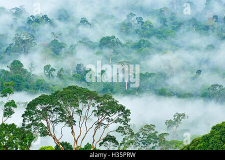 Fogs and mist over dipterocarp rain forest in Danum Valley Conservation Area in Lahad Datu, Sabah Borneo, Malaysia. - Stock Photo