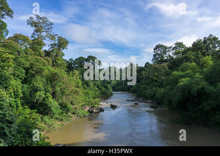 Segama river flanked by the undisturbed lowland dipterocarp forest in Danum Valley Conservation Area Sabah Borneo, - Stock Photo