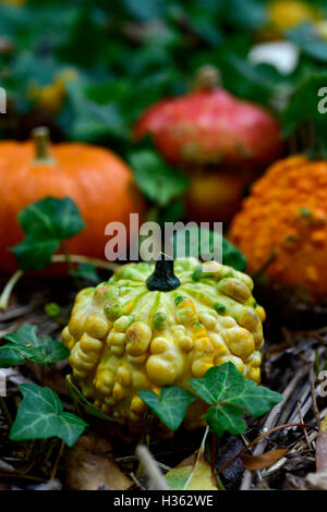 closeup of some different pumpkins in the garden or in the woods surrounded by ivy leaves - Stock Photo