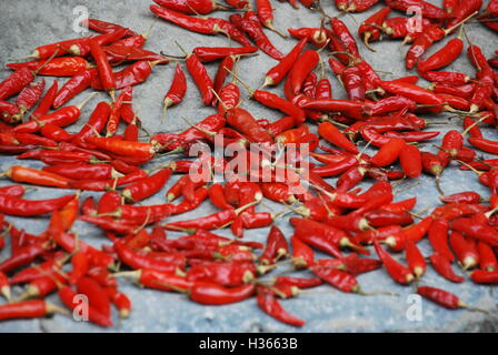Red chili peppers left out to dry in the Chinese countryside. - Stock Photo