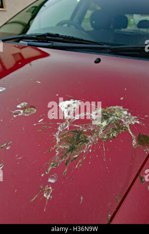 how to clean bird droppings from car