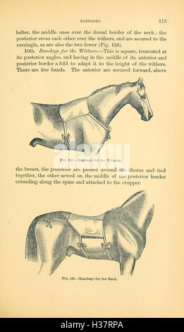 Manual of operative veterinary surgery (Page 113) BHL204 - Stock Photo