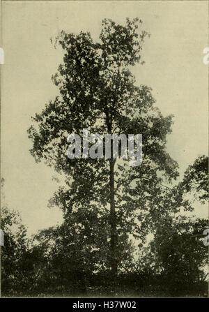 Mitteilungen der Deutschen Dendrologischen Gesellschaft (1912) (1459115 - Stock Photo