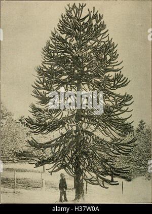 Mitteilungen der Deutschen Dendrologischen Gesellschaft (1918) (1477598 - Stock Photo