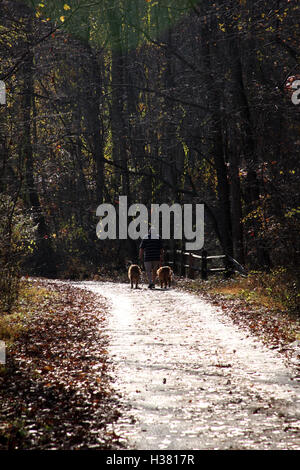 Person walking two dogs in leash on park trail in autumn - Stock Photo