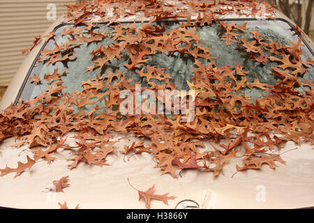 Dry oak leaves on parked vehicle - Stock Photo