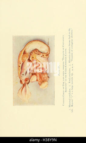 The diseases of the genital organs of domestic animals BHL213 - Stock Photo